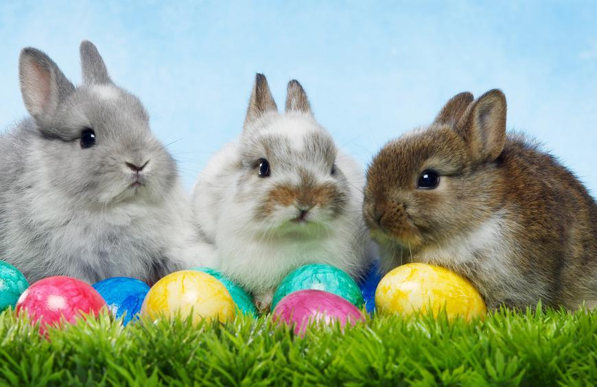 Easter Bunny HD Images