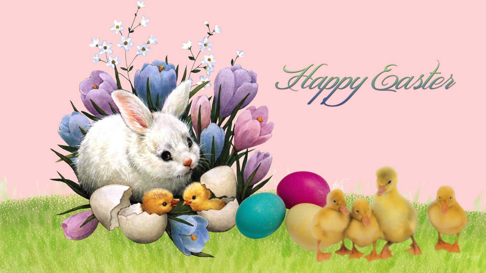 Easter Bunny HD Wallpapers Free