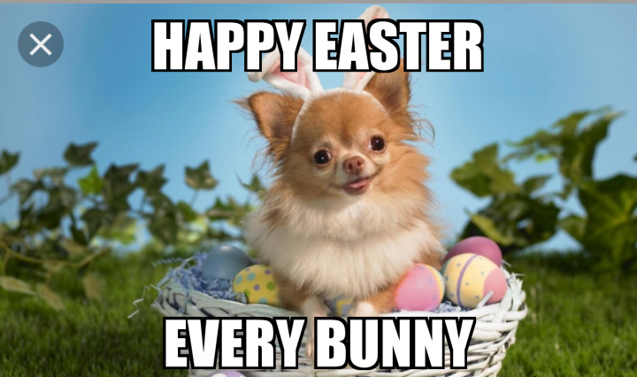 funny memes about easter