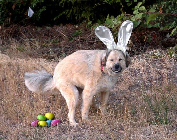 happy easter dog memes